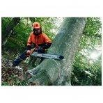 Kaip sėkmingai nuleisti medį?